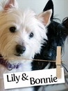 Meet Lily and Bonnie: The Cutest Dog Duo In Vermont!