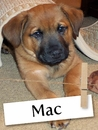 Meet Mac: The Rescue Pup Who Will Melt Your Heart
