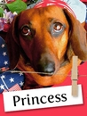 Meet Princess, The Truly Royal Dachshund