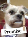 Meet Promise: An Amazing Companion Dog Who Continues to Give Back