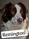 Meet Remington: The Hardworking Service Dog