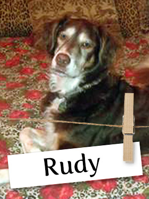 Meet Rudy: The Rescue Dog With A Heart Of Gold