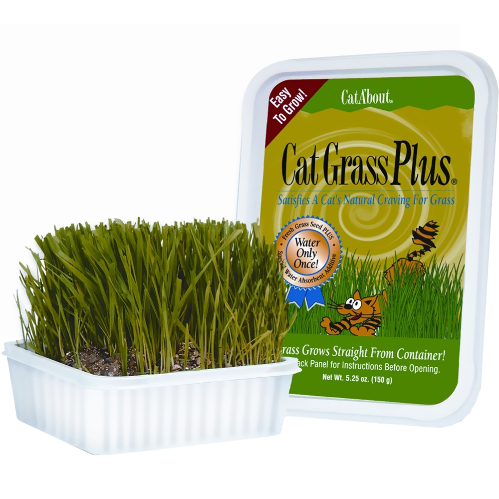 Miracle Care Cat A'bout Cat Grass Plus Tub (150 grams) im test