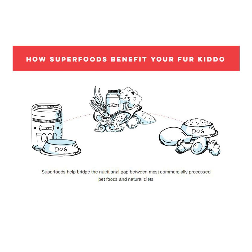 Three piles of food with dog bowls under quote reading how superfoods benefit your fur kiddo