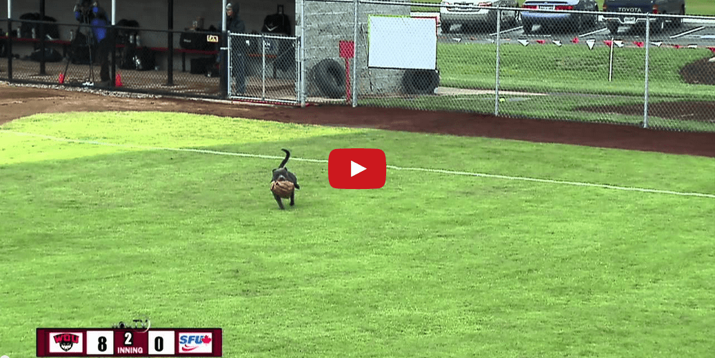 Move over Air Bud- this pooch puts on an athletic performance you DON'T want to miss!