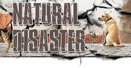 Natural Disaster Preparedness for Pets