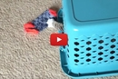 NEW! The Cat-Loading Laundry Basket!