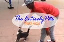 NY Cat Kicker Case Underway, Microchips Facilitate Pet Adoptions, Dog Sweater Saves Pooch from Fire and More in this week's EntirelyPets Weekly Recap! (January 3-9, 2015)
