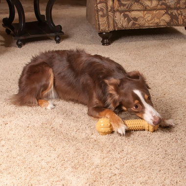 NYLABONE-DURA-CHEW-BARBELL-PEANUT-BUTTER-LARGE