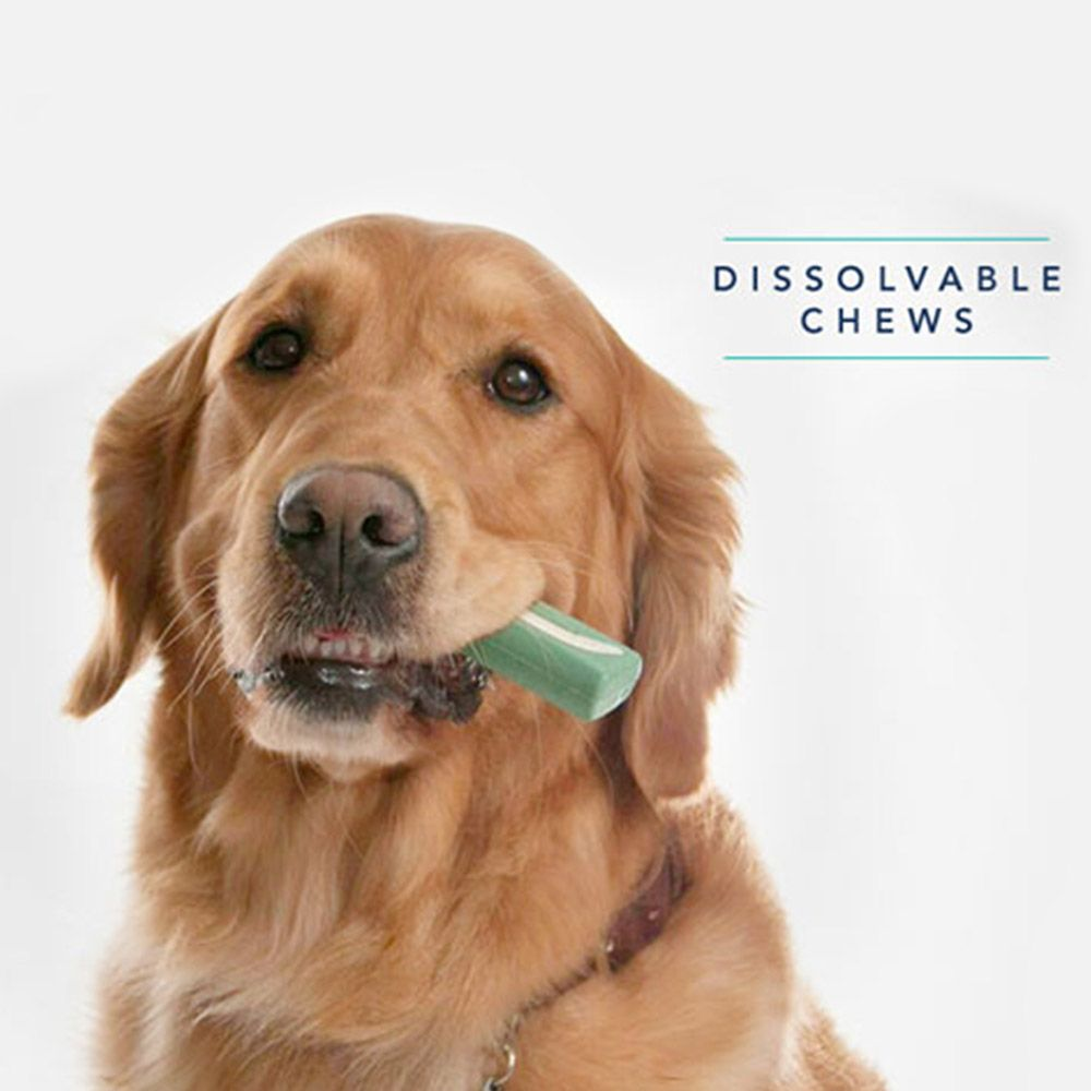 Adult golden retriever with half of the dental chew hanging out of its mouth next to quote reading dissolvable chews