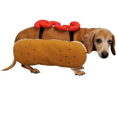 Otis and Claude Fetching Fashion Hot Diggity Dog Costume Ketchup (Medium) im test
