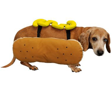 Otis and Claude Fetching Fashion Hot Diggity Dog Costume Mustard (Small) im test