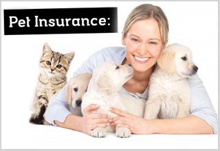 Pet Insurance: Is it Right for Your Pet?