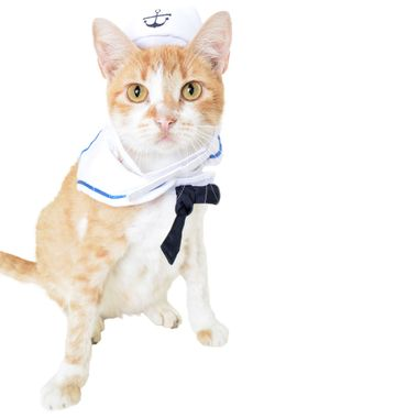 SAILOR-CAT-COSTUME