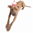 Pet Krewe Cupcake Hat Costume for Cats & Dogs - One Size