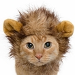 Pet Krewe Lion Mane Cat & Small Dog Costume