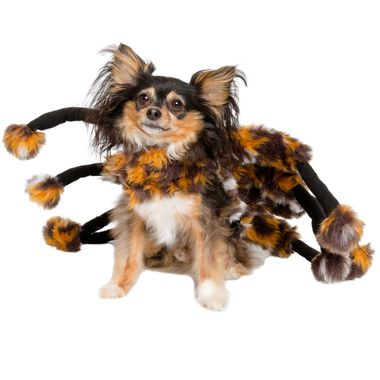 SCARY-SPIDER-CAT-COSTUME