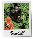 Pet of the Week: Snowball 1/26/2015
