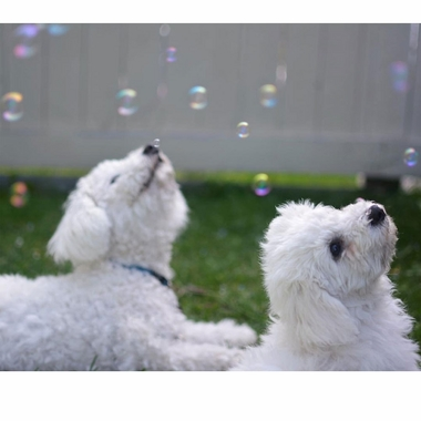 DOGGY-INCREDIBUBBLES-PEANUT-BUTTER