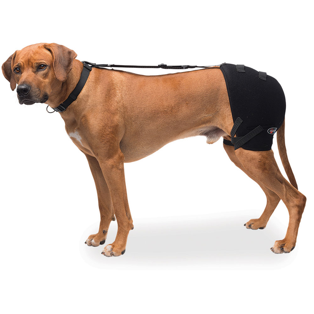 PET-THERAPY-WRAP-HIP-LARGE