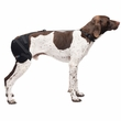 Pet Therapy Wrap with Therapy Gel - Hip (Medium)
