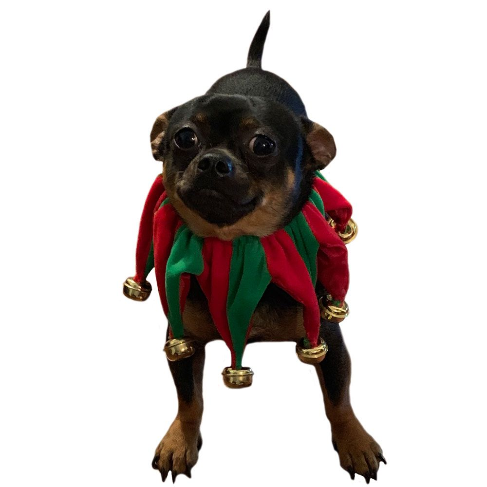 PET-WORKS-HOLIDAY-JESTER-COLLAR-WITH-BELLS-SMALL