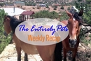 Placitas Takes a Firm Stance on Feral Horses, A Dog Makes an Amazing Rescue, and a Man Drives Across the Country for Shelter Animals- See What Else You Missed This Week with This Weeks EntirelyPets Weekly Recap (August 10-15, 2014)