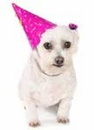 Planning the Perfect Pet Party