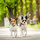 Popular Outdoor Activities for Pets