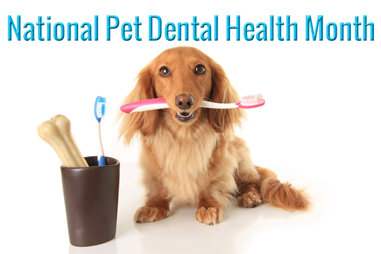 Prevent Dental Disease from Plaguing Your Pet with 3 Simple Steps