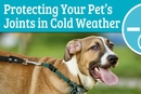 Protecting Your Pet's Joints in Cold Weather