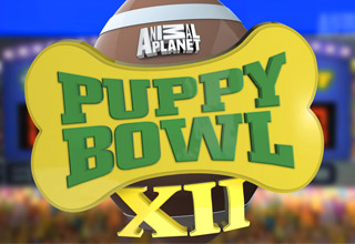 Puppy Bowl XII is Here!