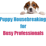 Puppy Housebreaking for Busy Professionals