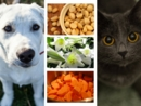 Quiz: Is it Poisonous for a Dog, a Cat, Neither or Both?