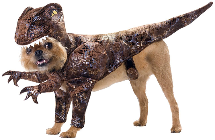 Raptor Dog Costume (Large) im test