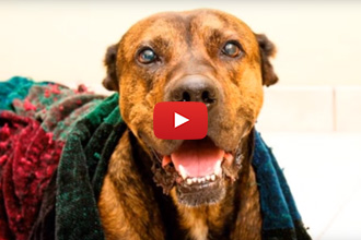 Ready For A Rescue Story To Get Your Week Started? Meet Bo!