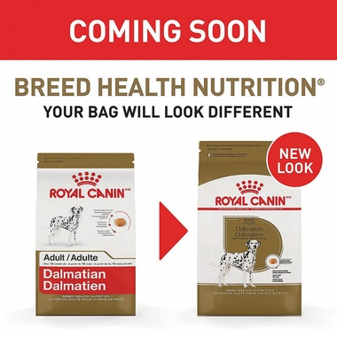 ROYAL-CANIN-ADULT-JACK-RUSSELL-TERRIER-DOG-FOOD-10LB