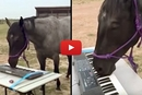 Sapphire The Horse Has An Untapped Talent That We Couldn't Believe!