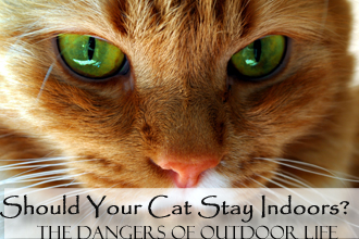 Should Your Cat Stay Indoors?: The Dangers of Outdoor Life