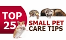 Small Pet Care Tips