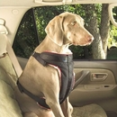 Solvit Pet Vehicle Safety Harness (Medium)