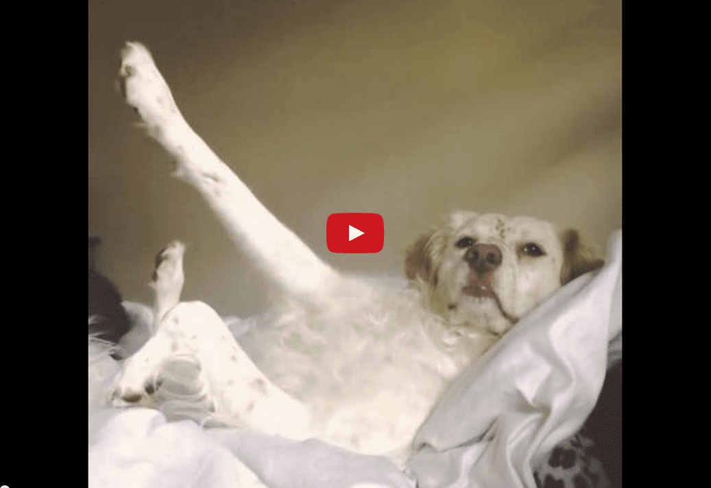 Sometimes the Best Response is a Casual One- Watch This Dog's Hilarious Answer to his Owner's Question!!