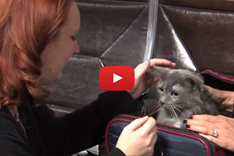 Sophie The Cat Is Reunited With Her Mom After 7 Years!
