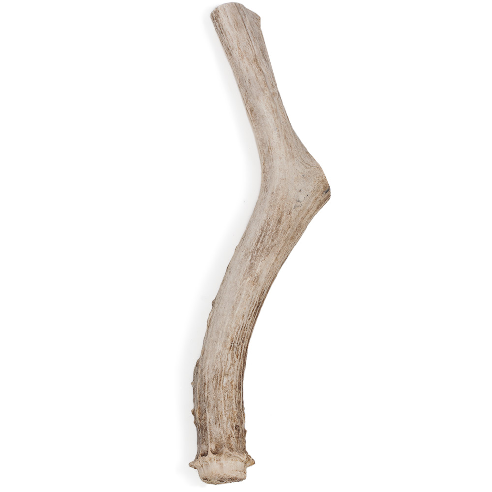 """Spizzles Deer Antler Dog Chew - Solid (Jumbo) 9"""""" im test"