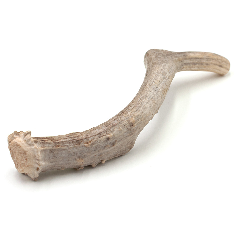 """Spizzles Deer Antler Dog Chew - Solid (Large) 7"""""" im test"