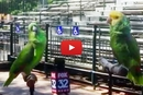 Synchronized Parrot Singing? Yes Please!