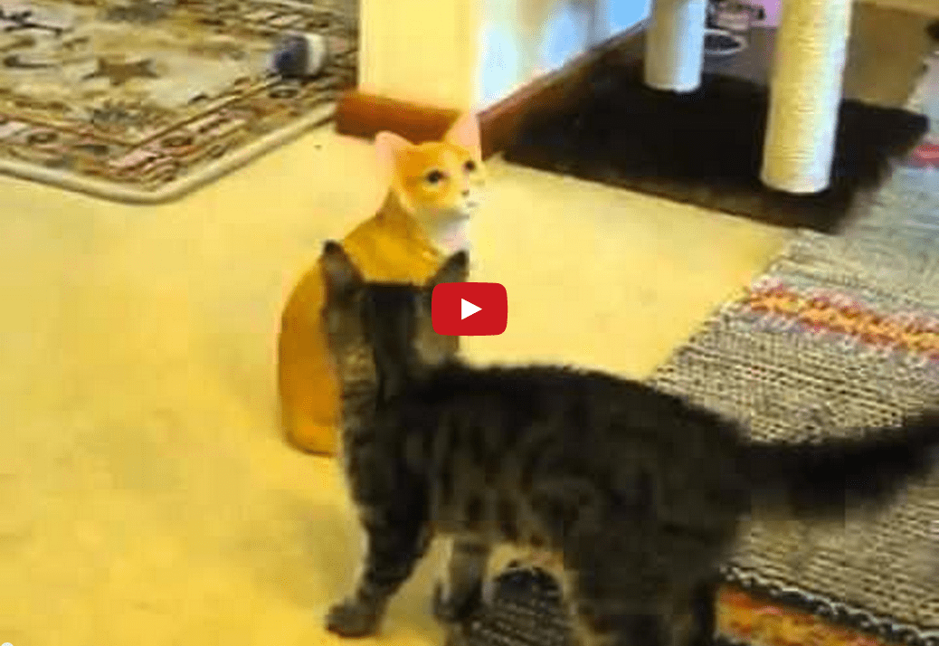 That's Embarrassing! This Cat Mistakes a Statue for Another Cat and It's HILARIOUS!!