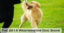 The 2014 Westminster Dog Show: A Step in the Right Direction