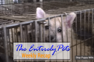 The Battle Against Puppy Mills Heats Up, Authorities Rescue More than 600 Animals in a Single Day, and the Pet Pharmaceutical Industry Booms- This and More in This Weeks EntirelyPets Weekly Recap (August 4-8, 2014)