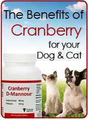 The Benefits Of Cranberry For Your Dog & Cat